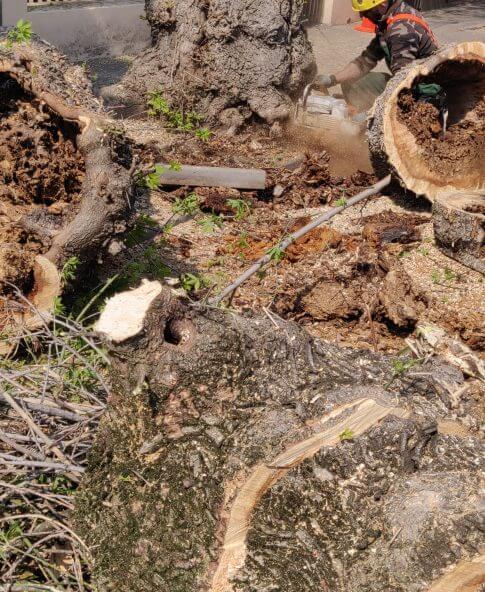 Defrisare Arbori periculosi de pe domeniul public
