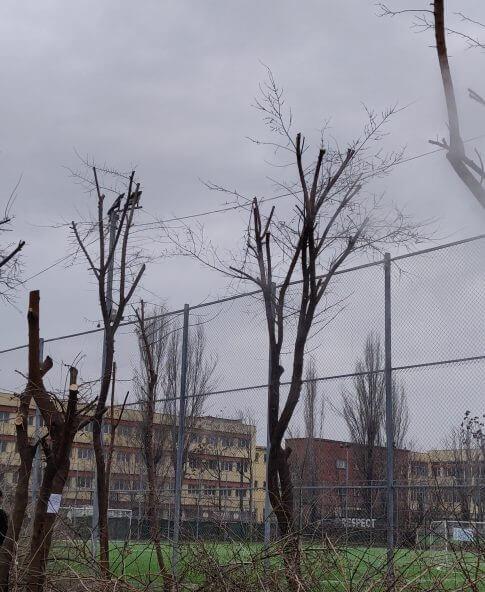 Toaletare de copaci efectuata cu succes in Bucuresti